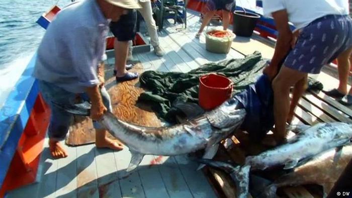 FOED Schwertfisch