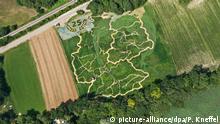 Zum 25. Jahrestag der deutschen Wiedervereinigung sind am 19.07.2015 in einem Labyrinth-Feld bei Utting am Ammersee (Bayern) die Umrisse der Bundesrepublik Deutschland mit all ihren 16 Bundesländern und ihren großen Flüssen zu sehen. Bei genauerem Hinsehe ist auch das Konterfei der Bundeskanzlerin Angela Merkel zwischen den diversen Grüntönen zu erkennen. Das überdimensionale Bild wurde aus einer Pflanzenmischung aus Sonnenblumen, Hanf, Mais und Wilder Malve angelegt. Das Labyrinth ist vom Team des Veranstalters Ex Ornamentis um Corinne und Uli Ernst auf dem rund 18.000 Quadratmeter großen Feld in unzähligen Arbeitsstunden seit der Aussaat im April diesen Jahres entstanden. Das etwa 3,1 Kilometer lange Labyrinth ist auch dieses Jahr wieder als Such- und Wissensspiel gestaltet, dass sich diesmal rund um die deutsche Wiedervereinigung dreht. Ab dem 22. Juli 2015 bis 27. September 2015 ist die Anlage täglich geöffnet. Info unter www.exornamentis.de. Foto: Peter Kneffel/dpa