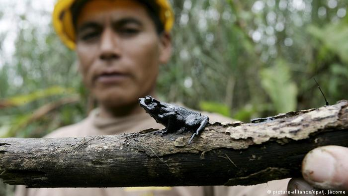 Ecuador Pipeline oil spill (Photo: picture-alliance/dpa/J. Jácome)