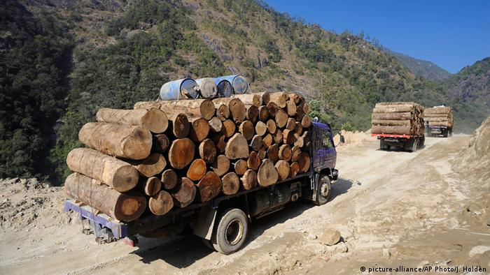 Wood laundering brings illegal Amazon timber to Europe