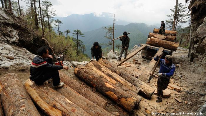 Myanmar Natur Forstwirtschaft (picture-alliance/AP Photo/J. Holden)