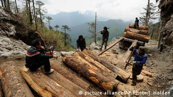 Myanmar Natur Forstwirtschaft