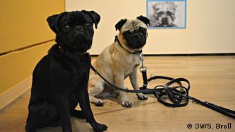 На выставке Auf den Hund gekommen