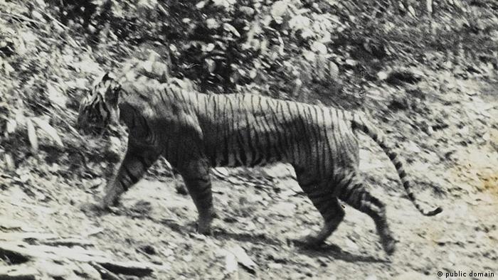 Java-Tiger