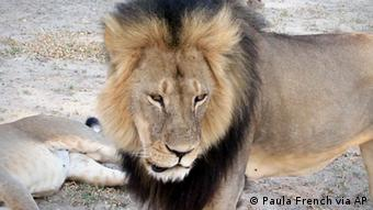 A still of Cecil taken from a 2012 video