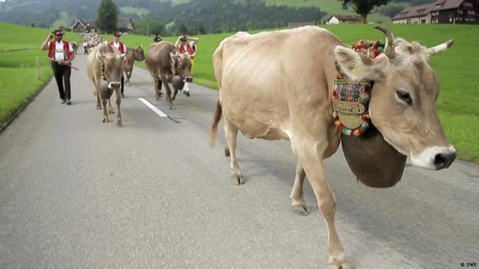 Videostill Schweiz FOED Kuhglocke