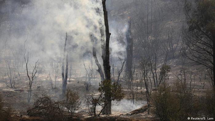 Smoke rises from charred trees are seen along Highway 20 during the Rocky Fire near Lower Lake, California
