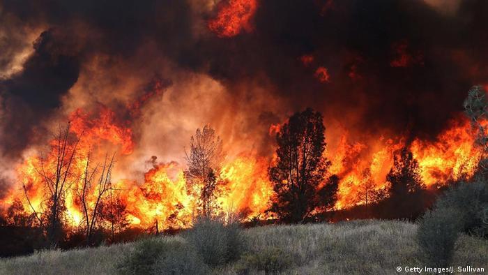 Bildergalerie Waldbrand Kalifornien (Getty Images/J. Sullivan)
