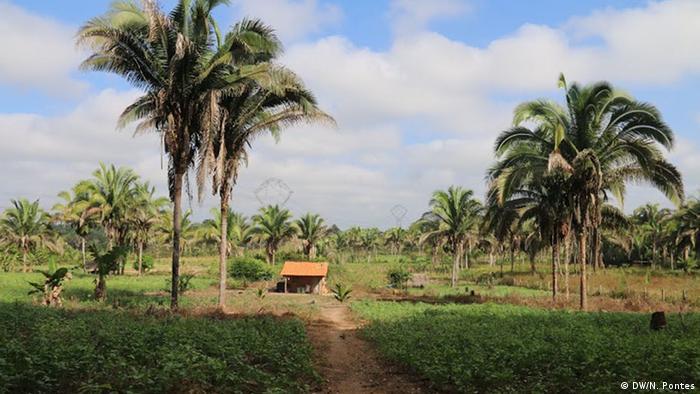 Private land holding babassu palms (Photo: Nádia Pontes)