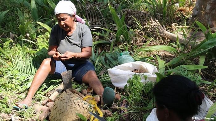Quebradeira de coco de babaçu no Maranhão: cooperativa também sofre na pandemia
