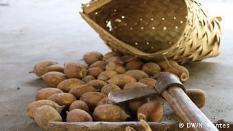 Brasilien Landwirtschaft