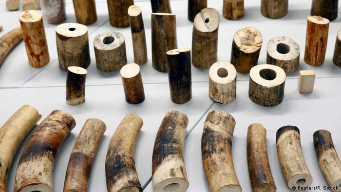 Ivory (photo: Reuters/R. Sprich)