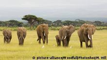 Kenia Elefanten
