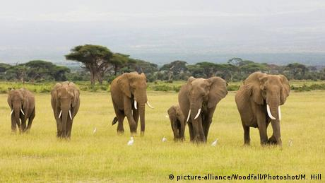 Elephant family in Kenya died due to poaching
