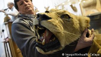 Symbolbild Jagdtrophäe Löwe