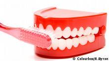 Gebiss Plastik Zahnbürste Zähne putzen