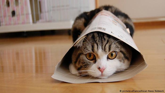 Maru Katze Youtube Star (picture-alliance/Asian News Network)