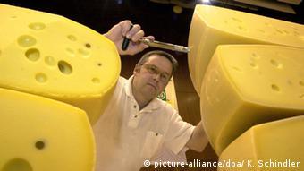 Эксперт проверяет качество сыров.