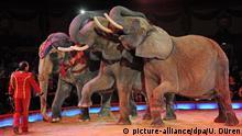 Symbolbild Zirkuselefanten