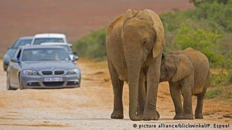 Südafrika Elefant (picture alliance/blickwinkel/P. Espeel)