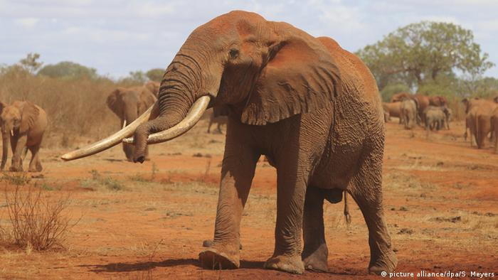 The special 'zombie gene' that protects elephants from cancer