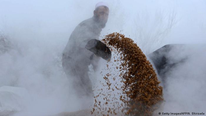 Afghanistan Landwirtschaft Reis (Getty Images/AFP/N. Shirzada)