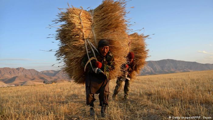 An Afghan farmer in Mazar-i-Sharif