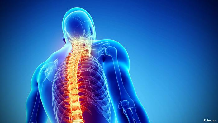 Digital image of spine and back against a blue background