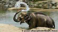 Indien Elefant duscht sich