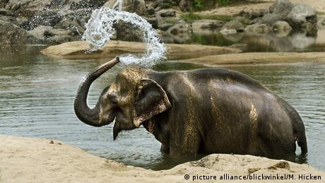 Elephant splashing himself with water (photo: picture alliance/blickwinkel/M. Hicken)