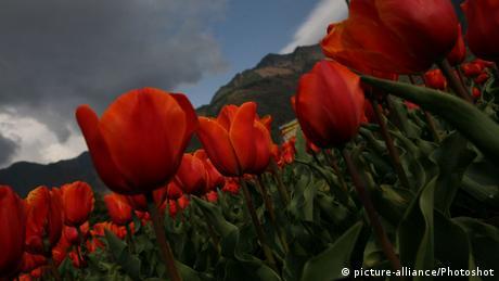 Indien Tulpengarten von Srinagar
