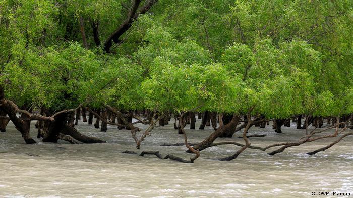 UNESCO Weltkulturerbe Sundarbans