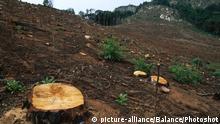Sambia Bwumba Wald Regenwald Abholzung