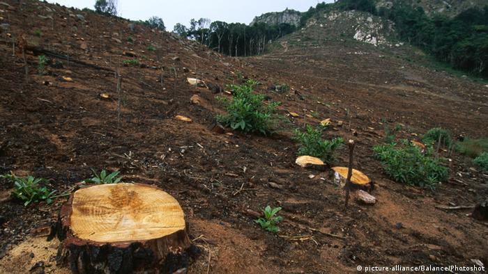 Árboles talados de un bosque de Zambia.