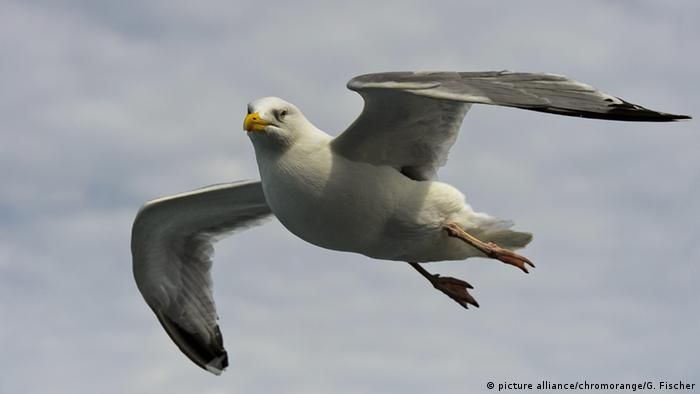 A seagull flying alone
