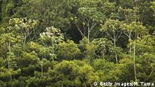Brasilien Amazona Regenwald