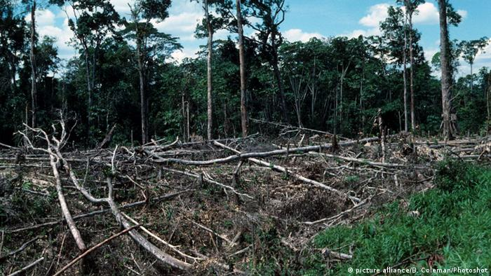 Image of deforestation in the Amazonía region in southern Colombia.
