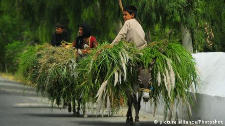 Junge sitzt auf Esel beladen mit Gras (Foto: picture alliance/Photoshot)