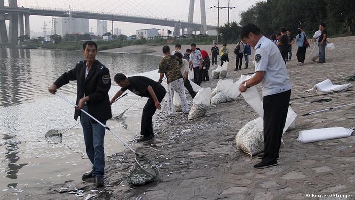 Tianjin Explosion Katastrophe Umweltkatastrophe tote Fische Fischschwarm Haihe Fluss Binhai China