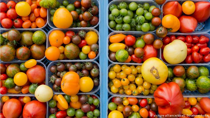 Red, yellow, black and green tomatoes in different shapes and sizes. The photograph is taken from above.