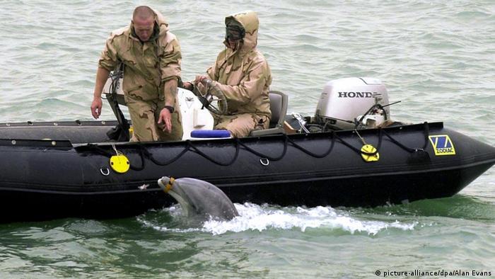 Bildergalerie Tiere im Krieg Delfin Australische Soldaten Navy Minen