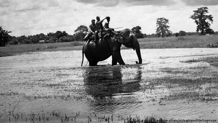 Bildergalerie Tiere im Krieg Elefant Zweiter Weltkrieg