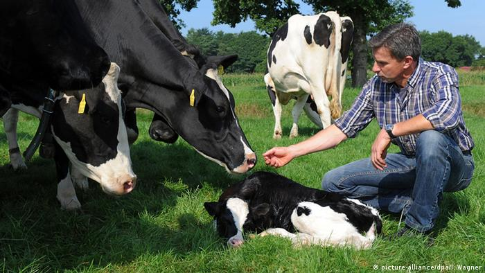German dairy farmer with his cows