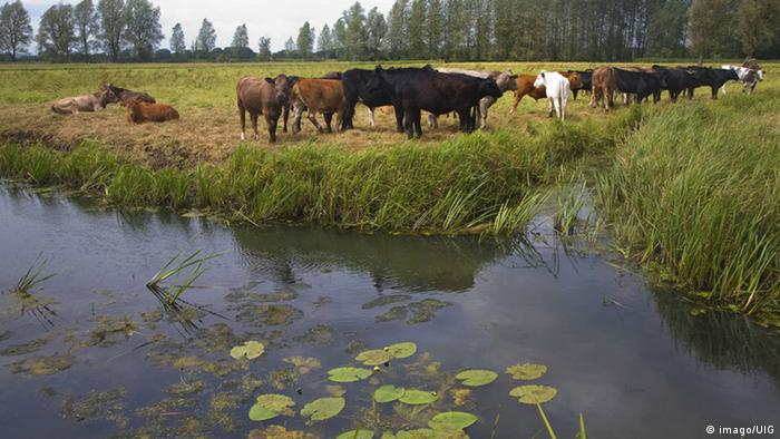 Livestock production is one of the most water-heavy industries.