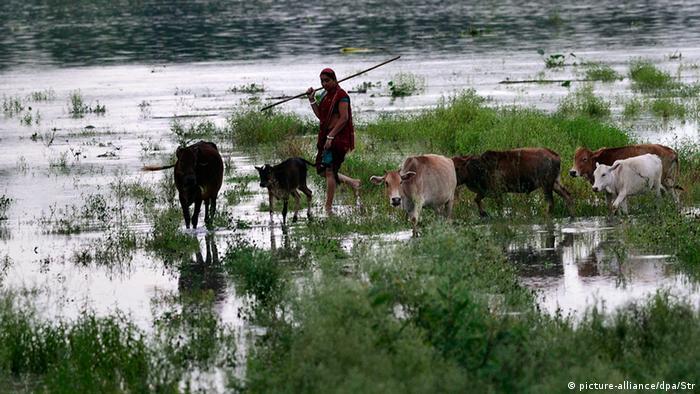 Überflutung Feld Klimawandel Kühe Frau Indien Assam