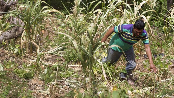 Honduras Dürre