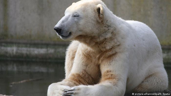 Deutschland Eisbär Knut SPERRFRIST