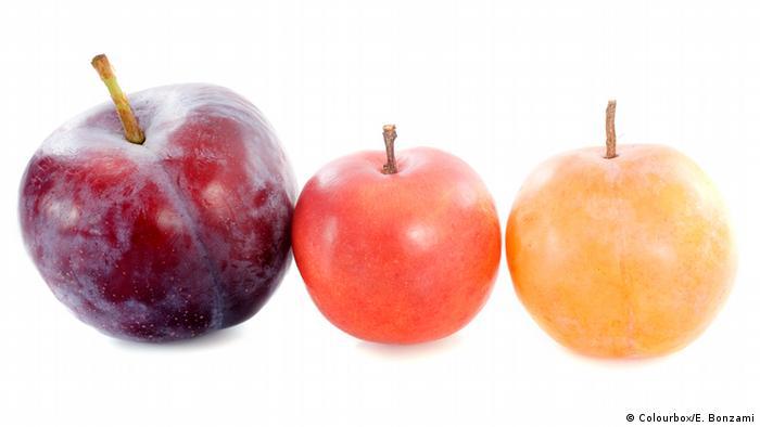 Plaume Mirabelle Frucht Obst Steinobst