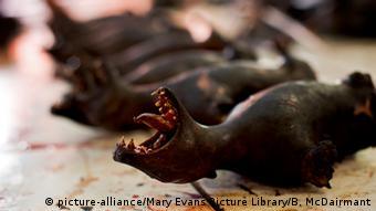 Indonesien Fleisch von Fledermäusen Markt von Tomohon (picture-alliance/Mary Evans Picture Library/B. McDairmant)