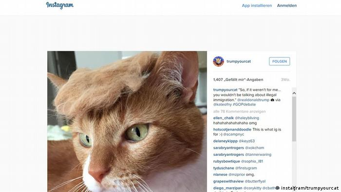 Screenshot von Instagram: trumpyourcat